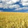 小麦粉の秘密を大公開。実は小麦粉にはたくさんの種類・用途があった!